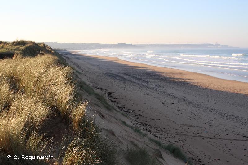 B1 - Dunes côtières et rivages sableux - EUNIS