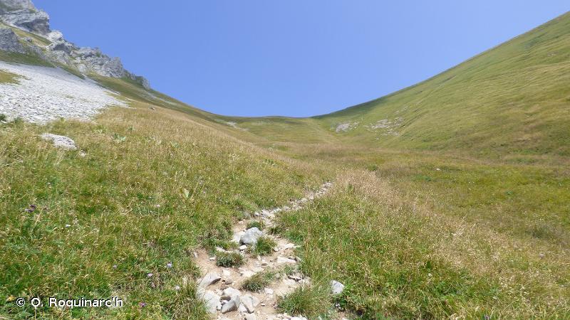 36 - Pelouses alpines et subalpines - CORINE biotopes