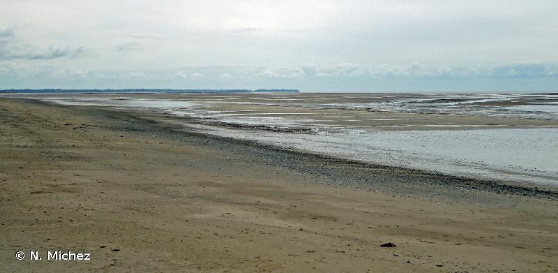 1140 - Replats boueux ou sableux exondés à marée basse - Habitats d'intérêt communautaire