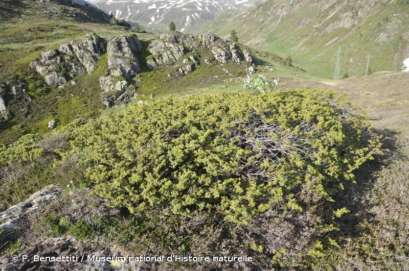 4060 - Landes alpines et boréales - Habitats d'intérêt communautaire