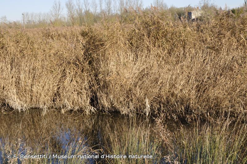 2190 - Dépressions humides intradunales - Habitats d'intérêt communautaire