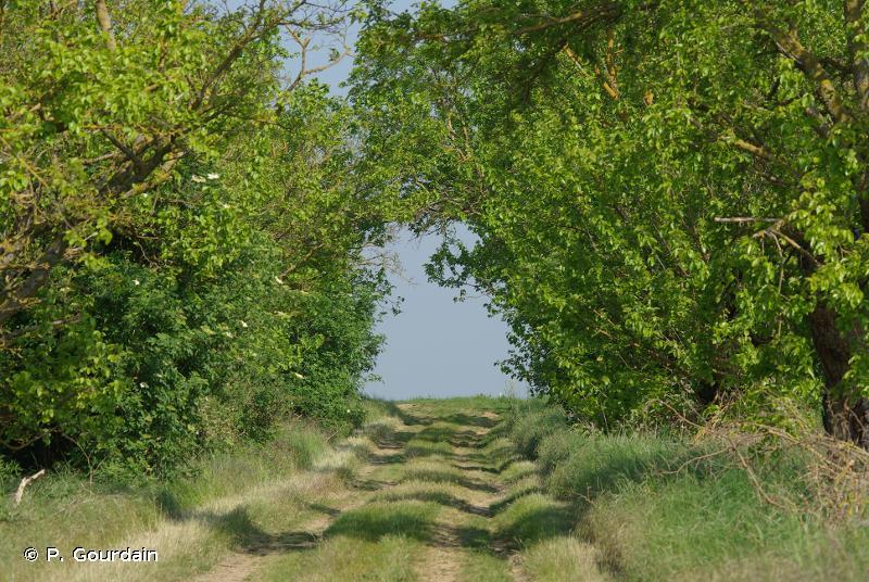 Vallée de l'Essonne et vallons voisins