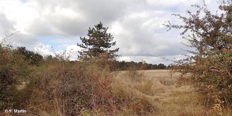 Plateau de Malzéville