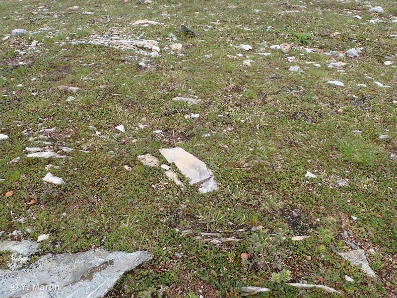 F2.111 - Communautés alpiennes acidiphiles des combes à neige à Saules nains - EUNIS
