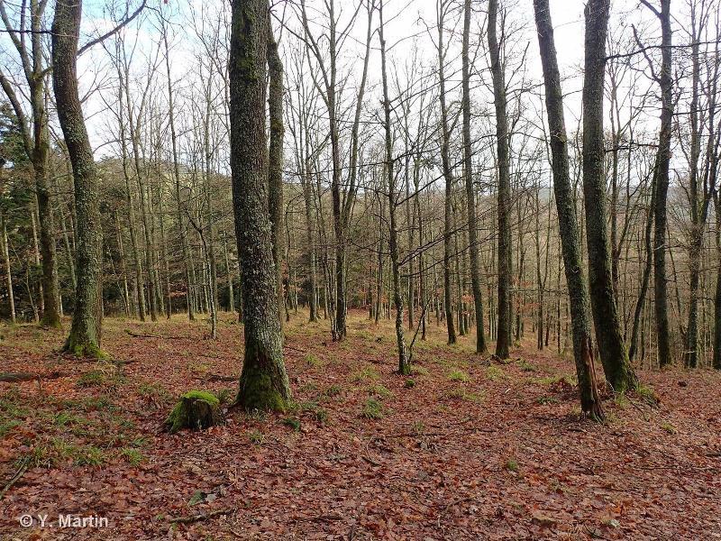 41.571 - Chênaies à Luzule des bois - CORINE biotopes