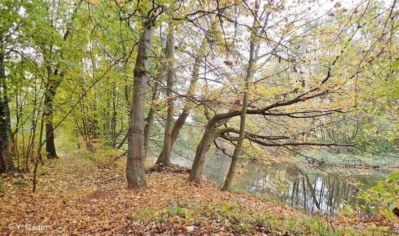 Cours et boisements riverains de la Bruche de Mutzig à sa confluence avec l'Ill à Strasbourg