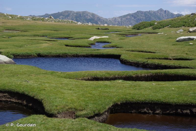 6170-18 - Pelouses mésohygrophiles et hygrophiles des pozzines de Corse - Cahiers d'habitats