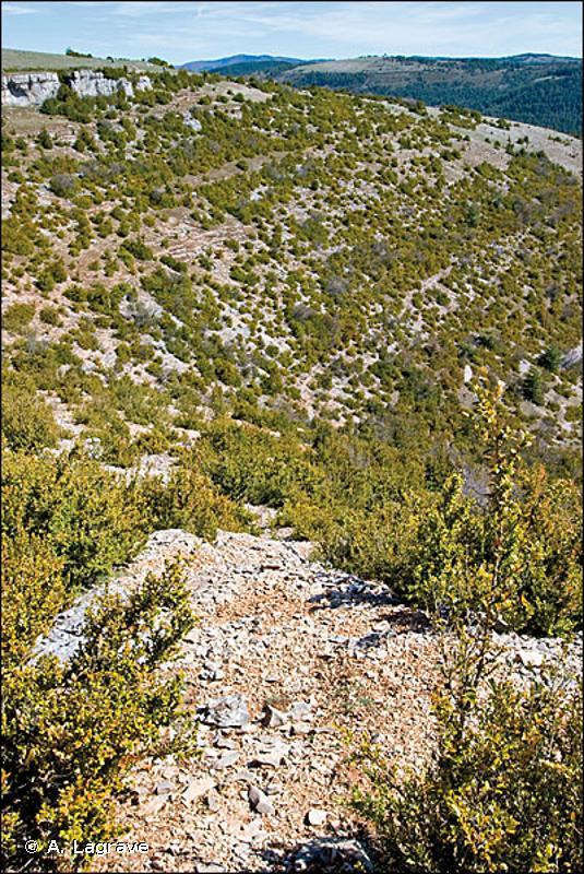 5110 - Formations stables xéro-thermophiles à <em>Buxus sempervirens</em> des pentes rocheuses (<em>Berberidion p.p.</em>) - Cahiers d'habitats