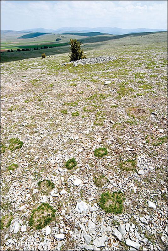 34.71 - Steppes méditerranéo-montagnardes - CORINE biotopes