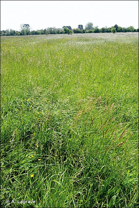 E2.22 - Prairies de fauche planitiaires subatlantiques - EUNIS