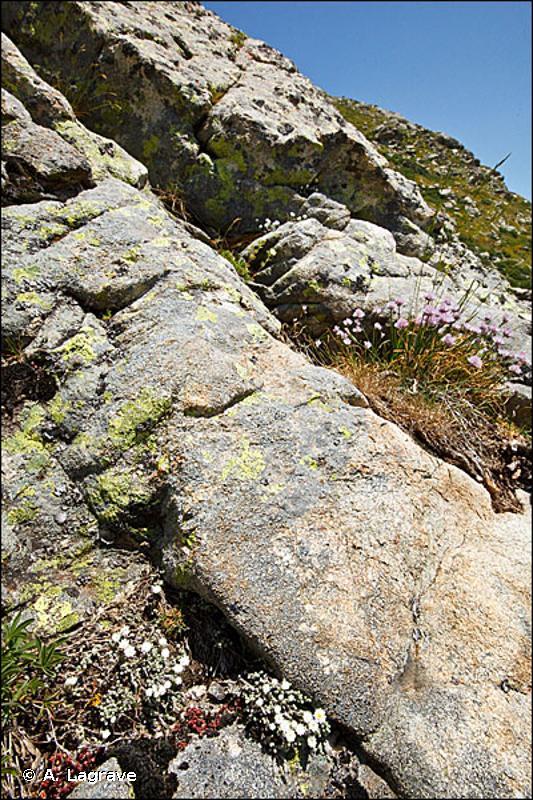 8220 - Pentes rocheuses siliceuses avec végétation chasmophytique - Habitats d'intérêt communautaire