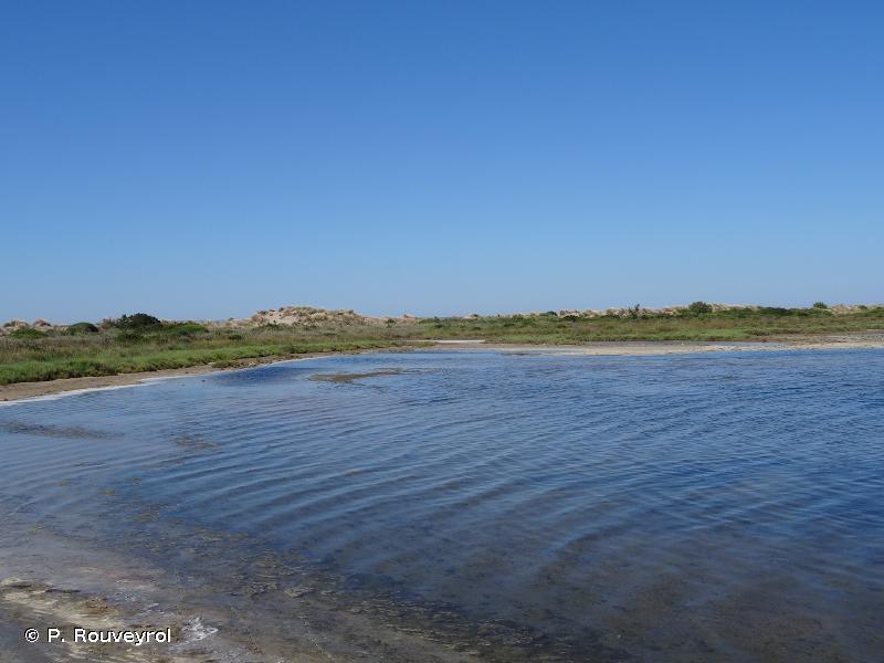 1150 - Lagunes côtières - Habitats d'intérêt communautaire