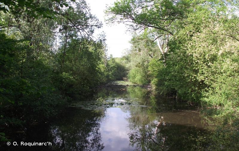C2.3 - Cours d'eau permanents non soumis aux marées, à débit régulier - EUNIS