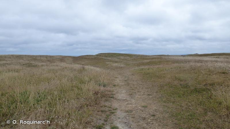 B1.4 - Pelouses des dunes côtières fixées (dunes grises) - EUNIS