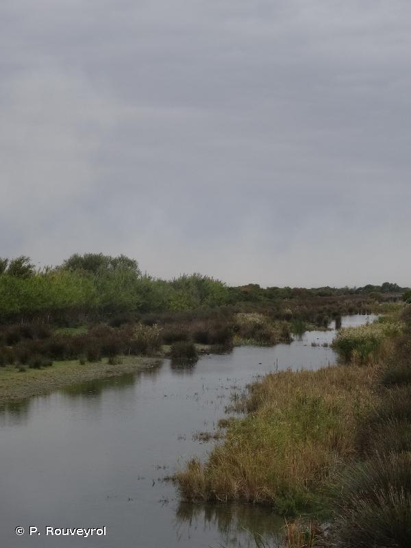 Marais du Vigueirat