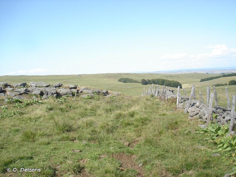 Plateau de l'Aubrac lozérien