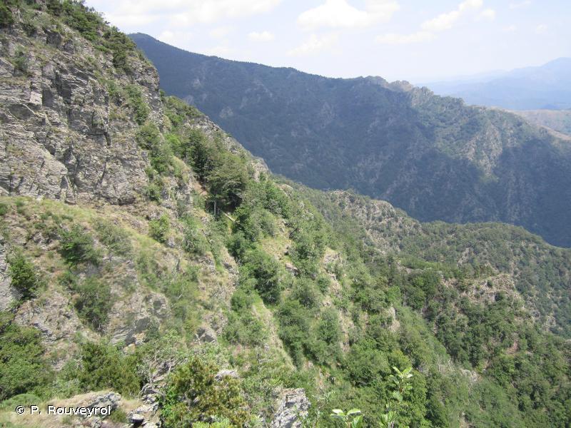 Massif de l'Aigoual et du Lingas