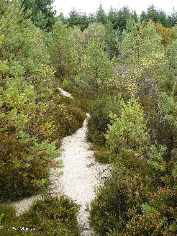 Forêt des Colettes