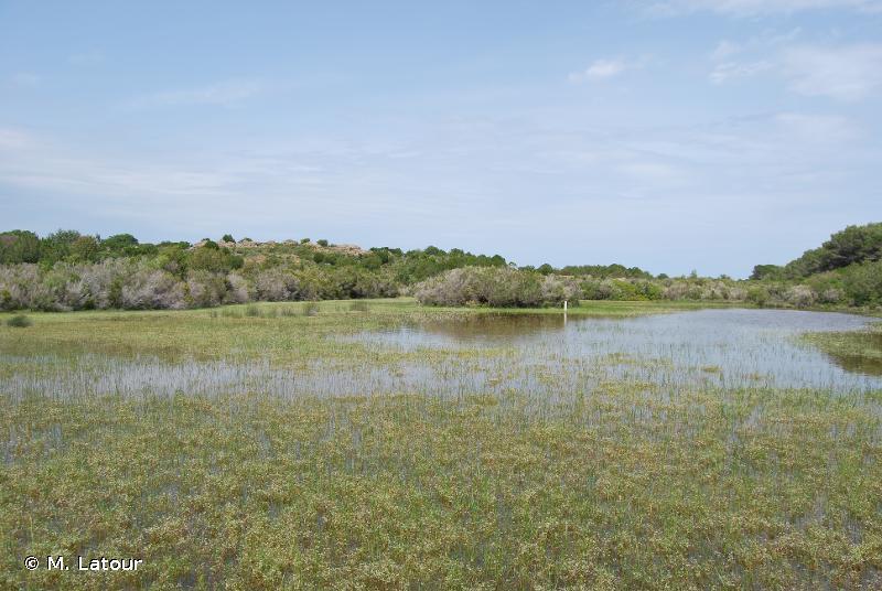 3170 - Mares temporaires méditerranéennes - Cahiers d'habitats
