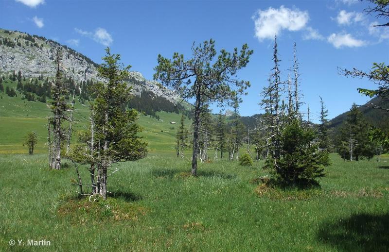 G3.E1 - Pinèdes tourbeuses à <em>Pinus mugo</em> - EUNIS