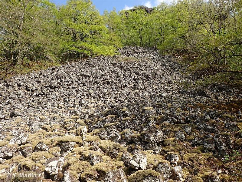 61.12 - Eboulis siliceux des montagnes nordiques - CORINE biotopes