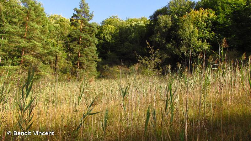 Marais tufeux du plateau de Langres (secteur Nord)