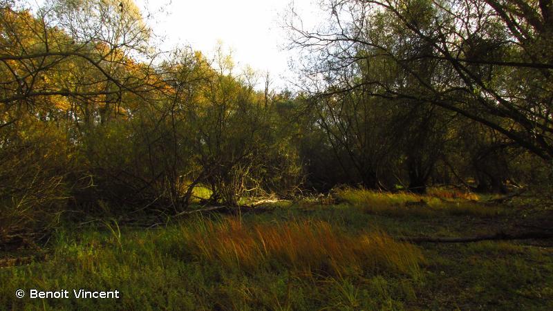 Réservoir de la Marne dit du Der-Chantecoq