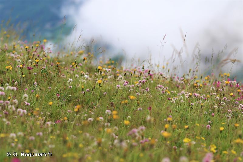E - Prairies ; terrains dominés par des herbacées non graminoïdes, des mousses ou des lichens - EUNIS