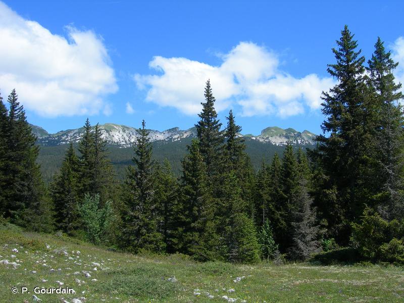 G3 - Forêts de conifères - EUNIS