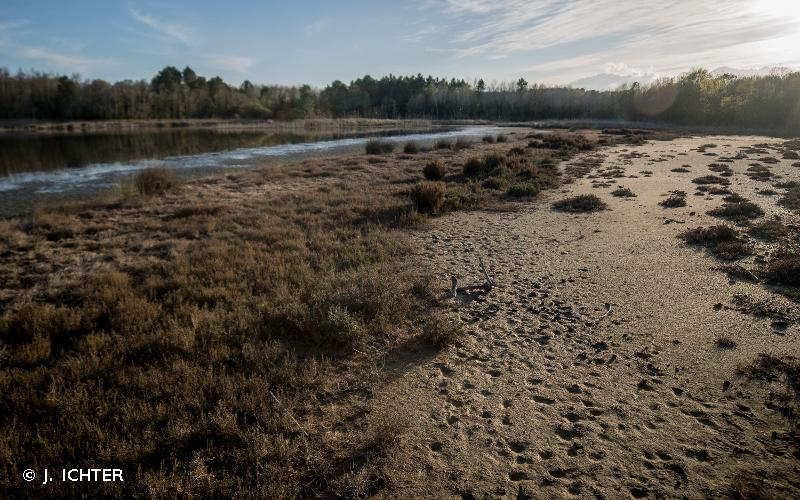Littoral, boisements et zones humides de Casabianda et Pinia