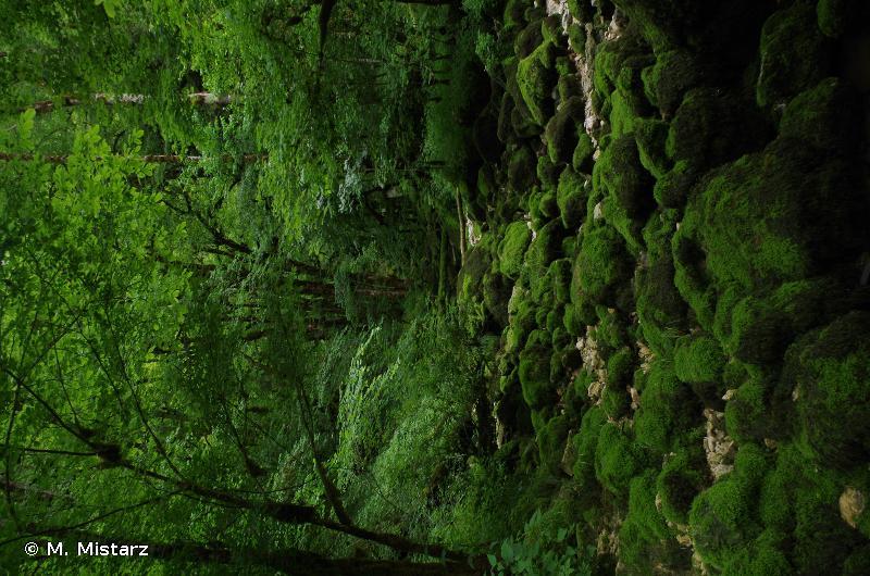 Vallée du Dessoubre