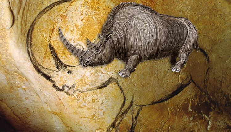 Rhinocéros laineux Coelodonta antiquitatis © Wikimedia / Rhinocéros peint dans la Grotte Chauvet © Inocybe CC0