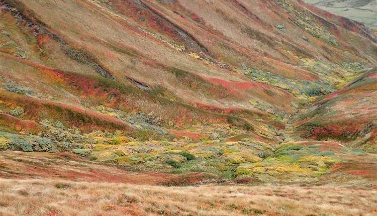 Brousses à Saules bas des Alpes © Y. Martin