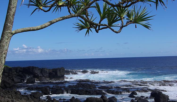 Mare Longue, La Réunion © Philippe Gourdain