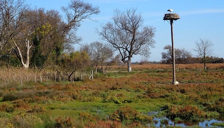 Plateforme de nidification à Cigogne sur le site Natura 2000 Étangs palavasiens © P. Rouveyrol
