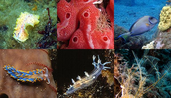 Photos BioObs