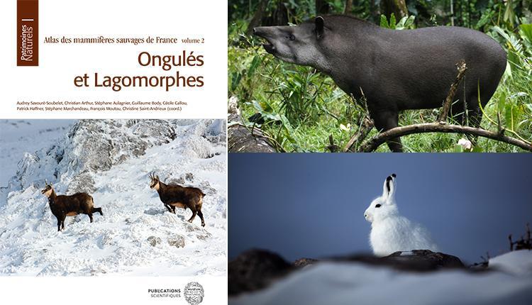 Chamois - Tapir terrestre Tapirus terrestris © Dewynter Mael - Lièvre arctique Lepus arcticus © Bruno Letournel
