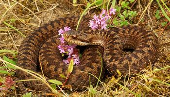 Nouvel arrêté national de protection des amphibiens et des reptiles de France
