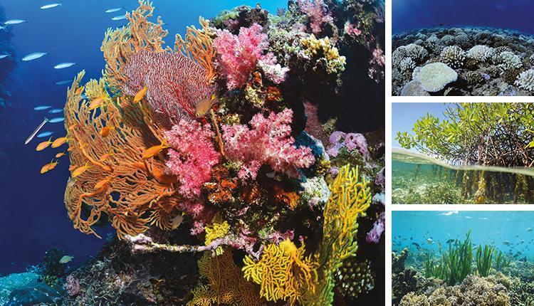 Récifs coralliens, mangrove et herbiers marins © Ifrecor