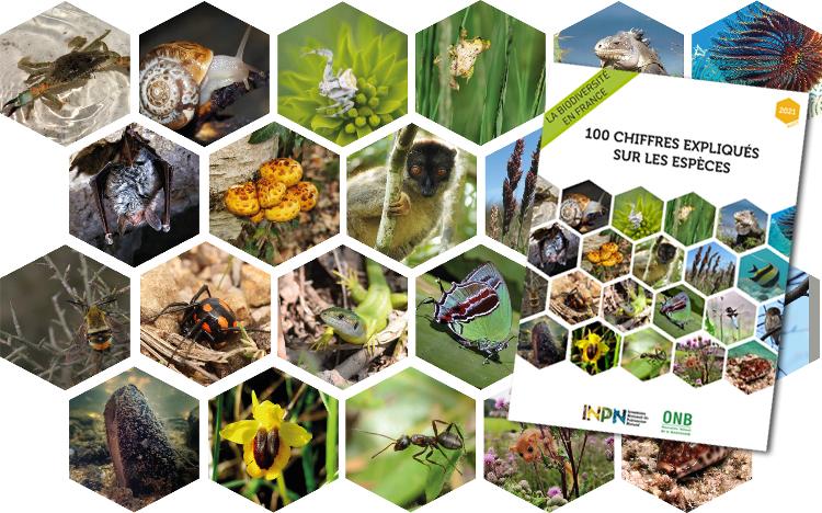 La Biodiversité en France 00 chiffres expliqués sur les espèces 2021 © INPN