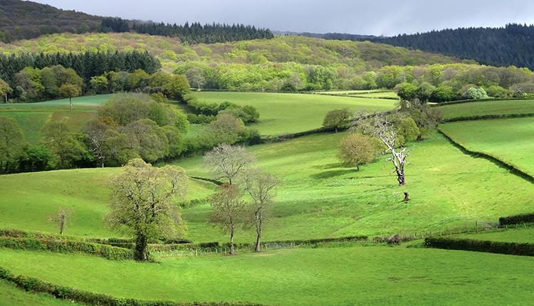 Parc naturel régional du Morvan © P. Rouveyrol