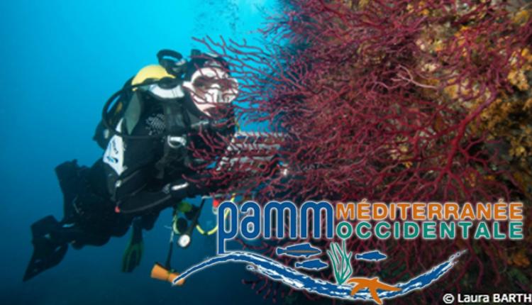 PAMM Méditerranée occidentale © Laura Barth / BioObs