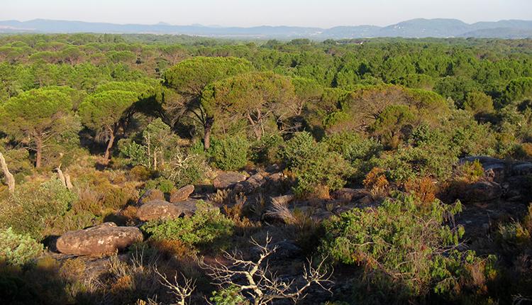 Réserve naturelle nationale de la Plaine des Maures © P. Gourdain
