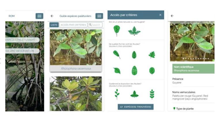 ROM Mangroves © DR