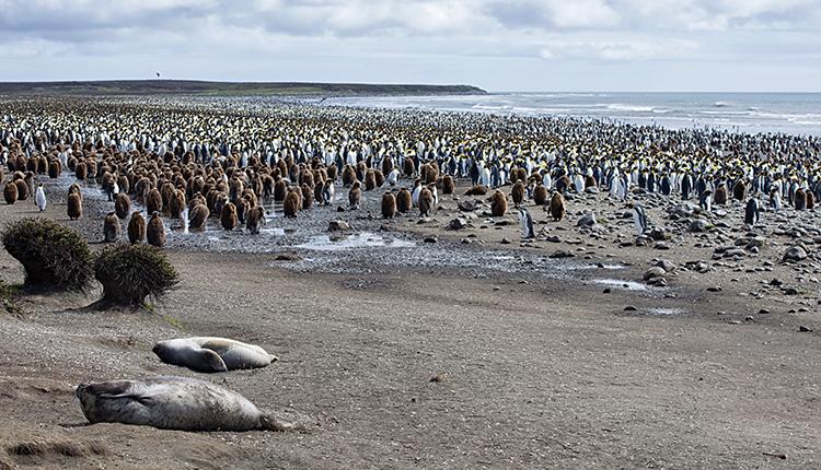 Réserve naturelle nationale des Terres australes françaises © Bruno Marie