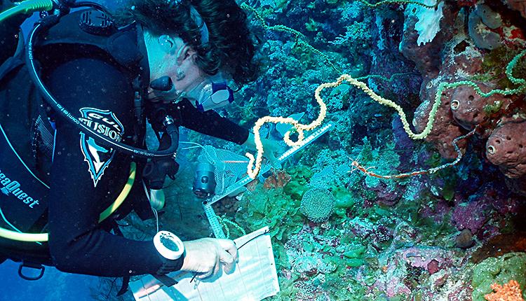 scientifique enregistrant les espèces de coraux pour les travaux de surveillance en cours © Anne Sheppard CC BY-SA 3.0