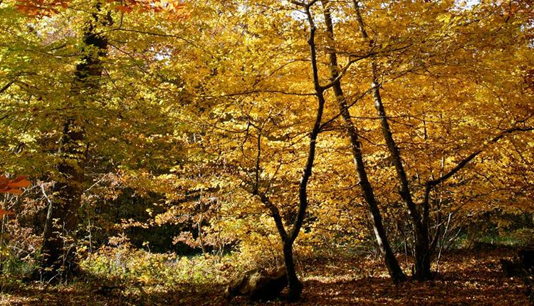 Sous-bois en automne © Thierry Degen / Terra