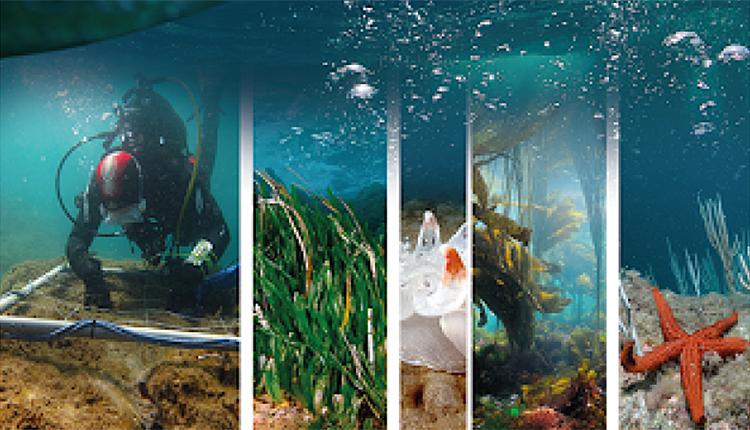 Appel à projets Analyse de l'impact des pressions sur les habitats marins des sites Natura 2000