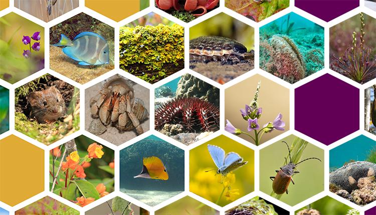 100 chiffres expliqués sur les espèces © INPN