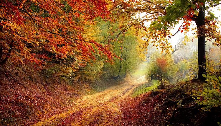 Forêt en automne © Pixabay CC0